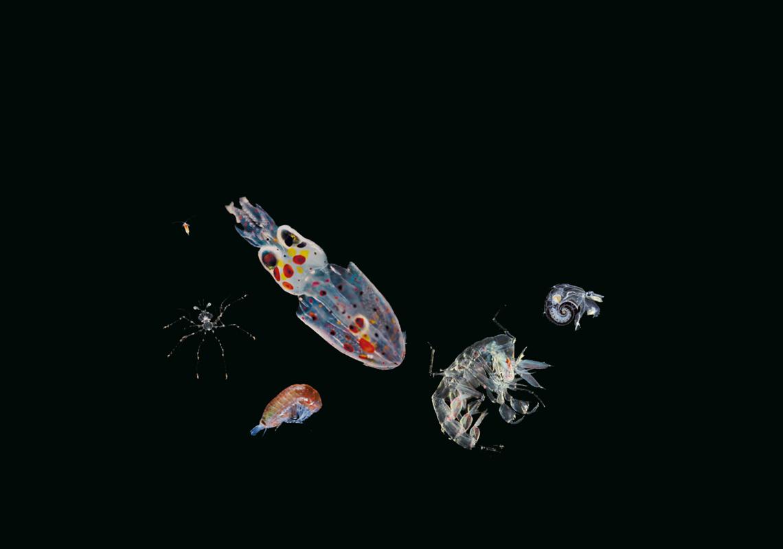 Zooplankton_11